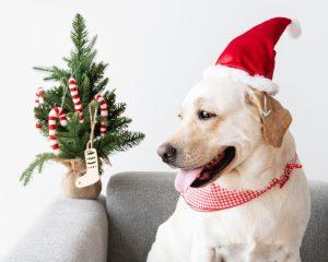 kerstboom huisdier